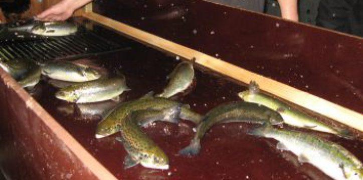 Fish feed quality Denmark