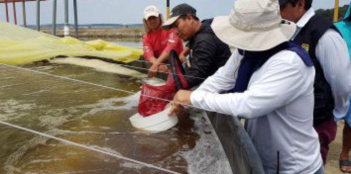 Feed consulting Ecuador
